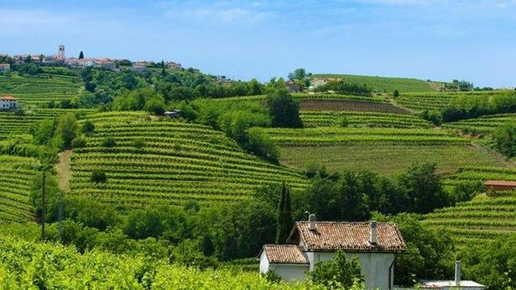 [Bizi lestvice] To so vinske kleti in vinarji, ki ustvarijo milijonske prihodke