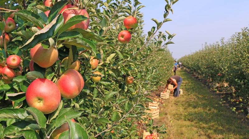 Sezonska dela v kmetijstvu so lahko priložnost za dodatni zaslužek